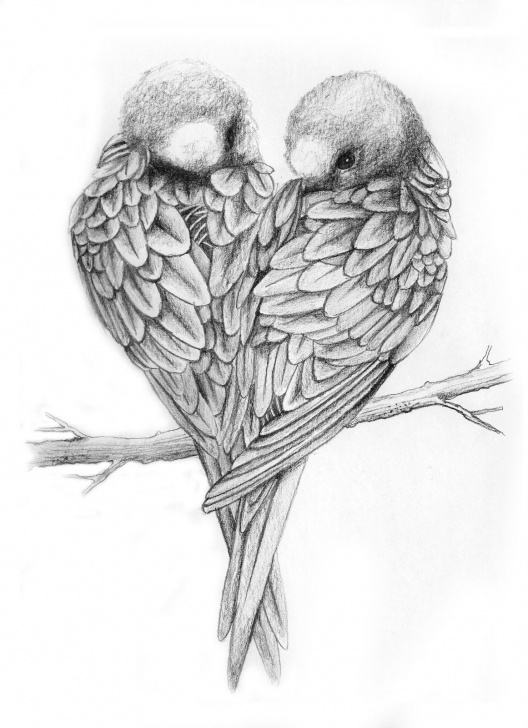 Outstanding Love Birds Pencil Drawing Lessons Drawings Of Love Birds | Love Birds Drawing Love Birds ♥ | Things Pics