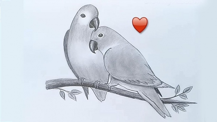 Outstanding Love Birds Pencil Drawing Techniques Two Parrots In Love By Pencil Sketch Pic
