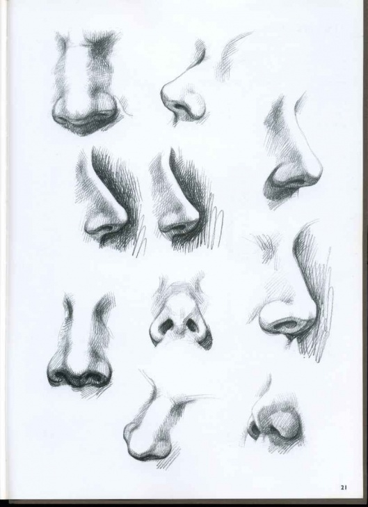 Outstanding Nose Pencil Sketch Easy 8+ Impressive Pencil Sketch Of A Nose Photos - Sketch - Sketch Arts Pics
