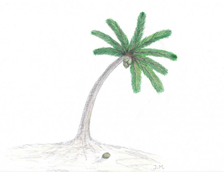 Outstanding Palm Tree Pencil Drawing for Beginners Palm Tree Sketch Easy At Paintingvalley | Explore Collection Of Picture