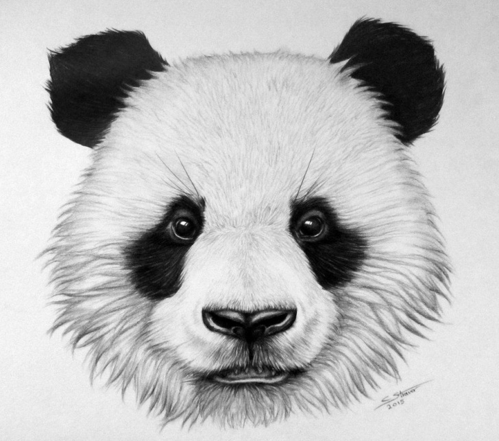 Outstanding Panda Drawing Realistic Lessons Here's My Drawing Of A Panda Bear! I Worked On It For A Video. Time Pic