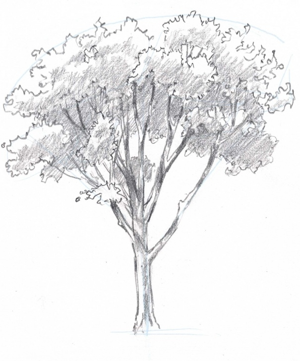 Outstanding Pencil Art Tree Simple How To Draw Trees: Oaks | Drawing | Tree Drawings Pencil, Drawings Pictures