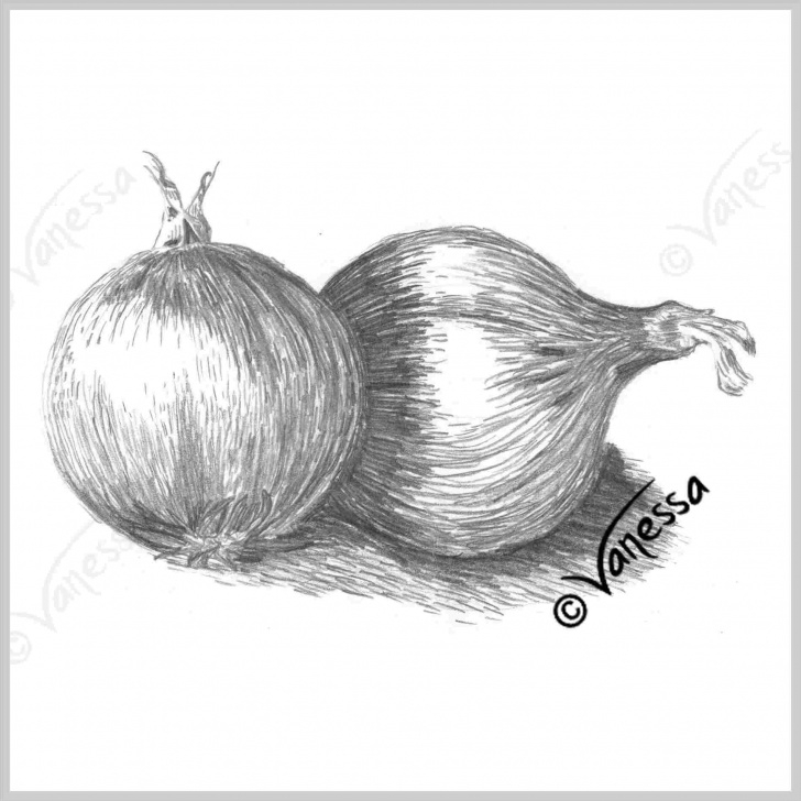 Outstanding Pencil Shading Of Vegetables Free Onions-Pencil-Drawing-Of-Vegetables-Still-Life-Study-Art-Original Image