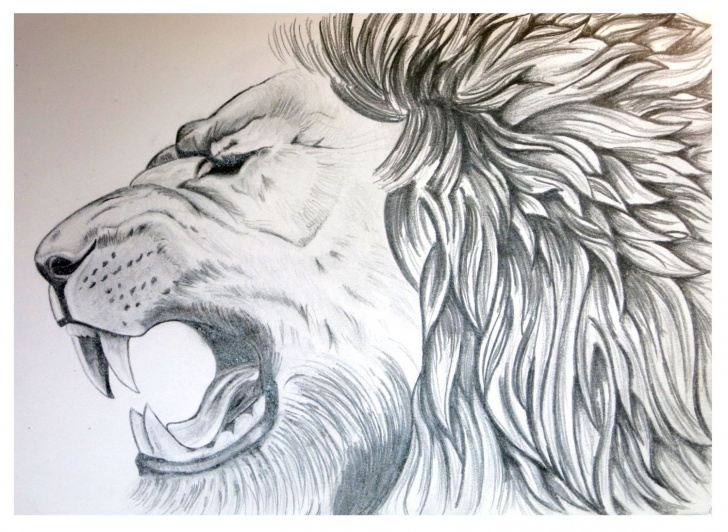 Outstanding Pencil Sketches Of Wild Animals Courses Lion Art Lion Poster Animal Sketch Graphite Drawing | F | Animal Pictures