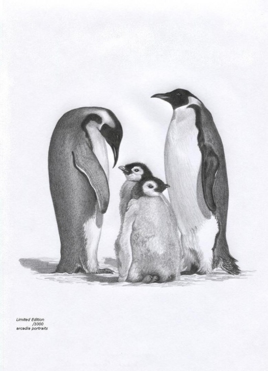 Outstanding Penguin Drawings In Pencil Techniques for Beginners Penguin C Pencil Sketch And Penguin Family Wildlife Art Pencil Picture