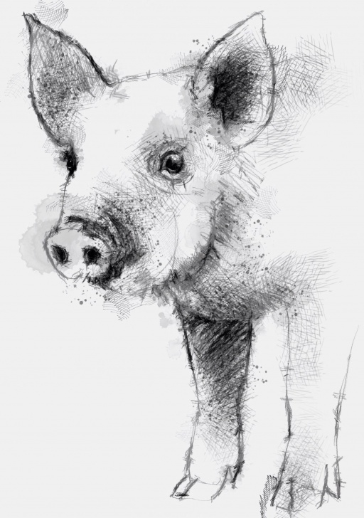 Pig Pencil Drawing