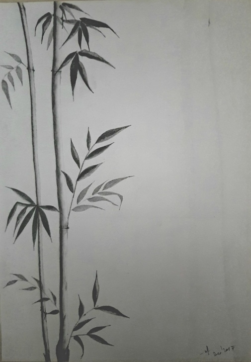 Outstanding Plant Pencil Drawing Lessons Bamboo Plant Pencil Sketch | My Sketches, Pencil Sketches, Pencil Pics