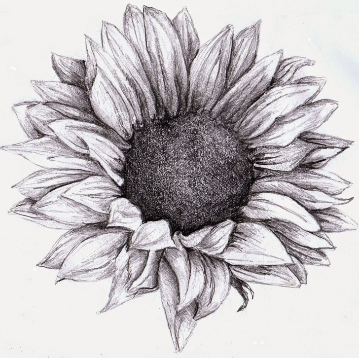 Outstanding Sunflower Pencil Drawing Lessons Sunflower Drawing, Pencil, Sketch, Colorful, Realistic Art Images Pictures