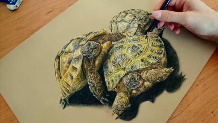 Outstanding Tortoise Pencil Drawing Simple Colored Pencil Drawing: Tortoise - Speed Draw | Josymovies Pictures