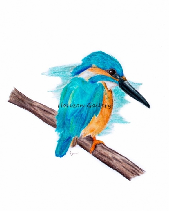Popular Bird Colored Pencil Courses Kingfisher, Bird, Colored Pencil Art, Instant Digital Download, Art Print,  Kingfisher Art Print Pics