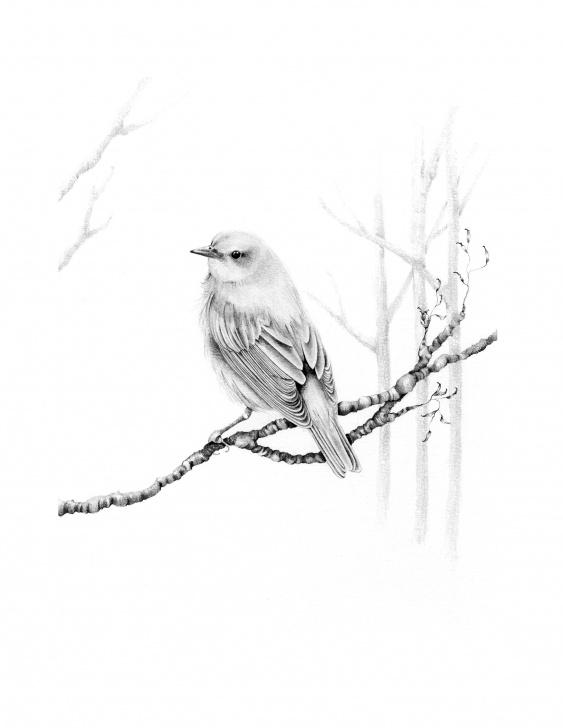 Popular Bird Drawing Pencil Step by Step Bird Drawing Giclee Fine Art Print Pencil Drawing Bird Wall Art Minimalist  Bird Drawing Original Art Print Illustration Bird Nature Decor Pics
