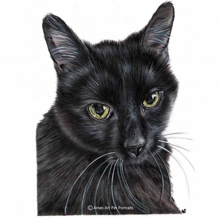 Popular Black Cat Pencil Drawing Lessons Cat Pet Portrait Of Belle The Black Cat. From The Usa. Faber Castell Pic