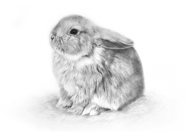 Popular Bunny Pencil Drawing Free Signed Giclee Print Baby Bunny Pencil Drawing By Gemmahaywardart Pictures