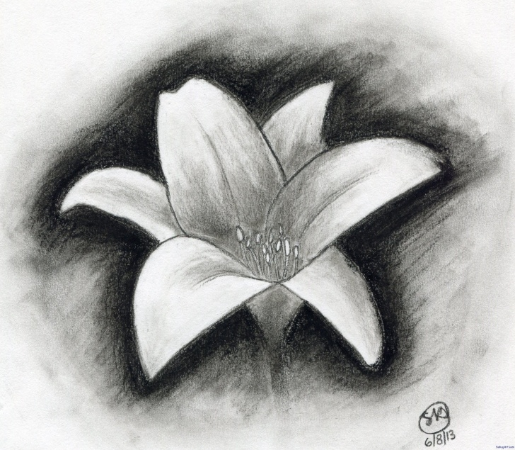 Popular Charcoal Drawing Step By Step Courses Easy Charcoal Drawings Flowers | Shading In 2019 | Easy Charcoal Pics