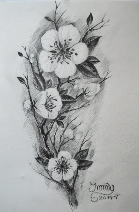 Popular Cherry Blossom Pencil Drawing Ideas Cherry Blossom Tree Pencil Drawing At Paintingvalley | Explore Pictures