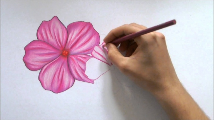 Popular Color Pencil Drawing For Beginners Techniques for Beginners How To Draw A Flower-Color Pencil Drawing Photo