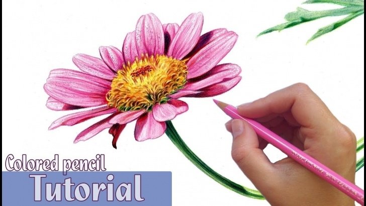 Popular Colored Pencil Flowers Courses How To Draw And Shade A Flower In Colored Pencil Photos
