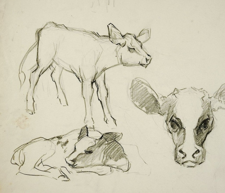 Popular Cow And Calf Pencil Drawing Ideas Pencil Study Of Calves Drawing In 2019 | Cow Drawing | Animal Photos