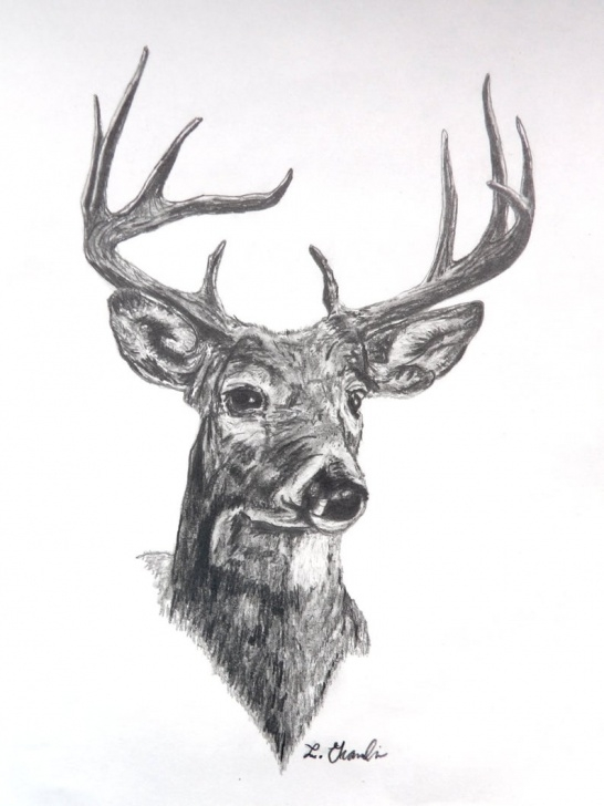 Popular Deer Pencil Drawings Simple Deer Pencil Drawing Print 8X10 Card Stock. Deer Hunting Drawings. Drawings.  Drawing Print. Pencil Drawing Print. Deer. Gifts For Hunters. Pics