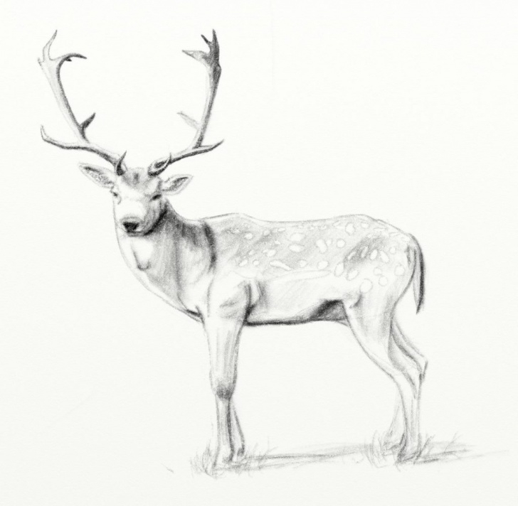 Popular Deer Pencil Drawings Step by Step Pencil Drawings Of Deer - Soner.toeriverstorytelling Image