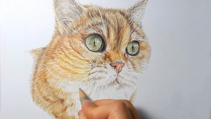 Popular Drawing Animals In Colored Pencil Free How To Draw Realistic Cat Fur With Colored Pencils | Emmy Kalia Image