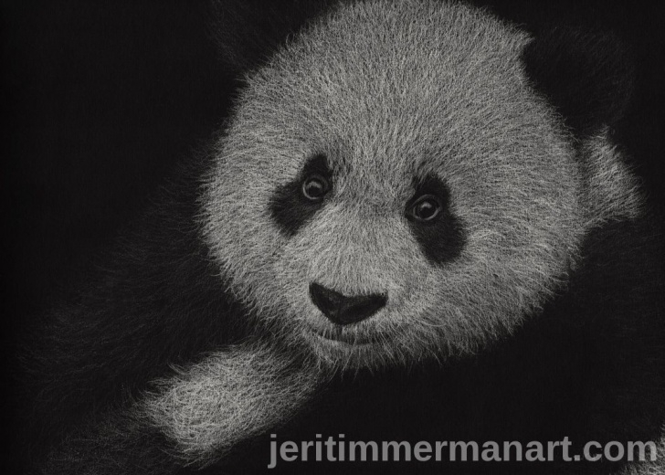 Popular Drawing With White Pencil On Black Paper Easy White Pencil On Black Paper Drawing Of A Panda. | My Pencil Art In Image