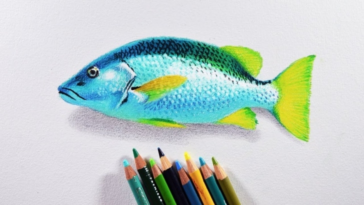 Popular Easy Prismacolor Drawings Techniques for Beginners How To Draw A Fish - Prismacolor Colored Pencils Tutorial. Photos