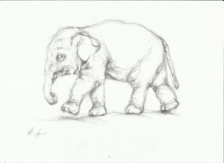 Popular Elephant Pencil Drawing Simple Elephant Sketches Drawings At Paintingvalley | Explore Picture