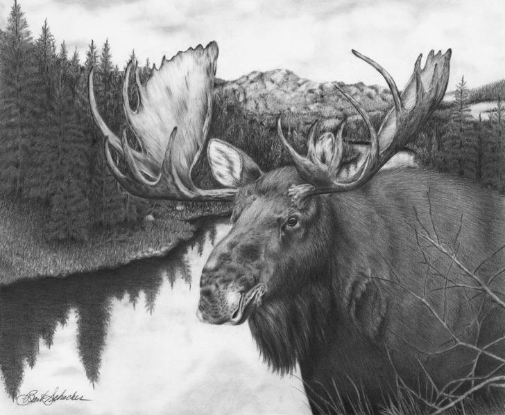 "Popular Elk Pencil Drawings Tutorials ""Melozi River Moose"" Original Wildlife Pencil Drawing Picture"