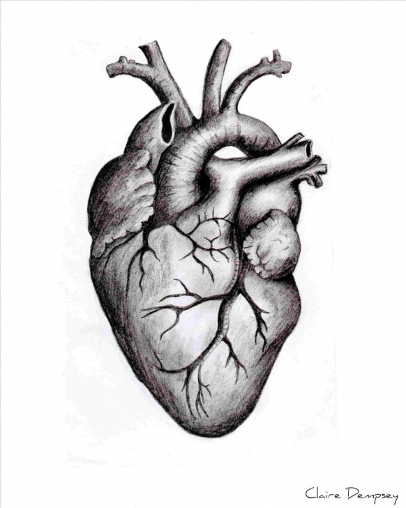 Popular Human Heart Pencil Drawing Techniques for Beginners Human Heart Drawings In Pencil | Drawing Work Picture