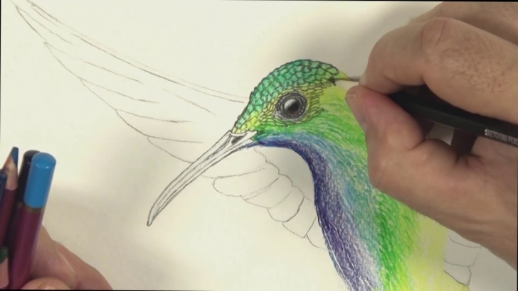 Popular Hummingbird Drawings In Pencil Easy How To Draw A Hummingbird With Colour Pencils Pic