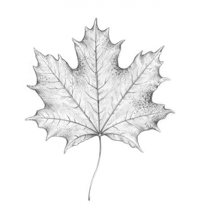 Popular Leaf Drawings In Pencil Tutorial How To Draw A Leaf Step By Step Image