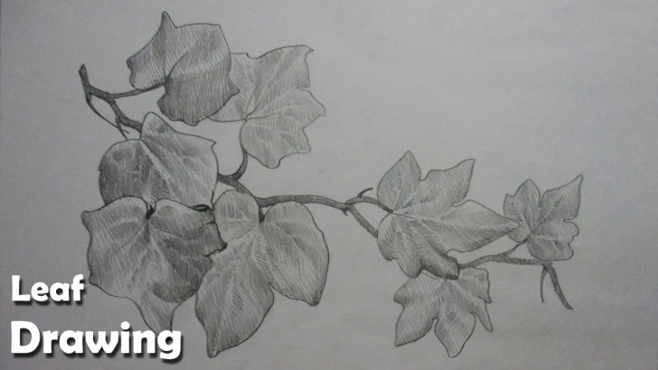 Popular Leaf Pencil Sketch Tutorial How To Draw Leaves In Pencil Strokes | Step By Step Pics