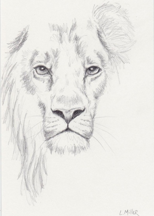 Popular Lion Pencil Art Techniques Lion Pencil Drawing, Original 5X7 Big Cat Sketch, Lion Fine Art Photo