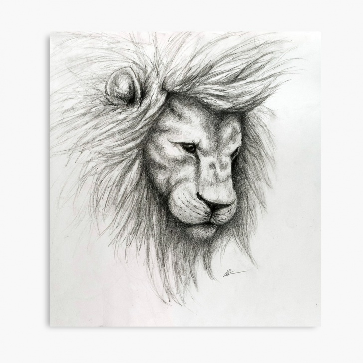 Popular Lion Pencil Sketch for Beginners Lion Pencil Sketch | Canvas Print Images