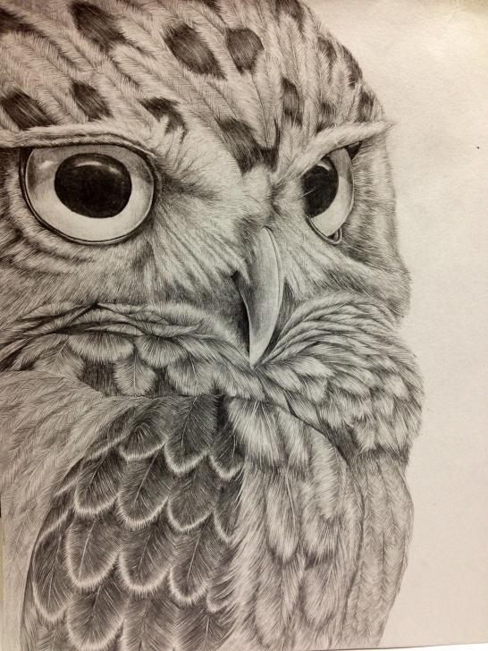 Popular Owl Pencil Drawing Tutorials Pencil Drawing. Owl - Album On Imgur Photos