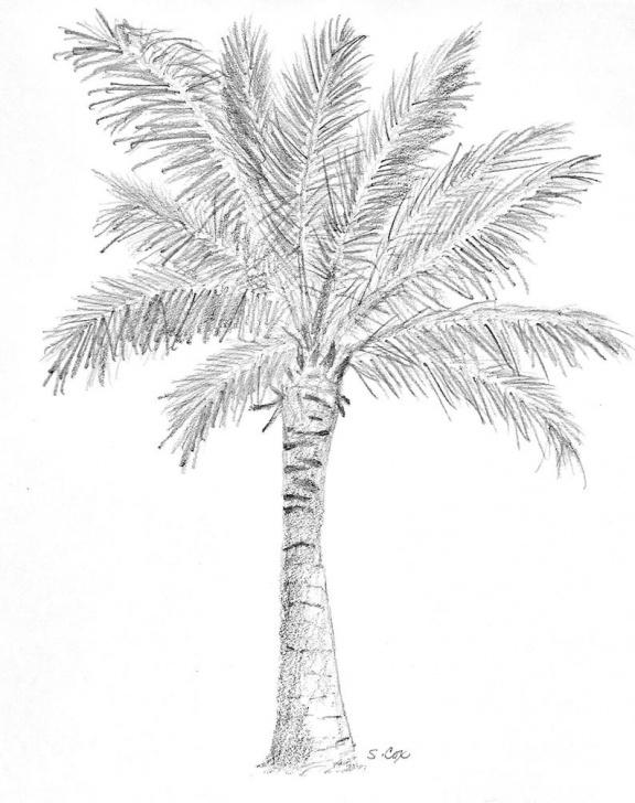 Popular Palm Tree Pencil Drawing Techniques Palm Tree Art, Nature Pencil Sketch, Coastal Drawing, Palm Tree Print,  Tropical Artwork, Nature Art, Tree Sketch, Black And White Print Pics