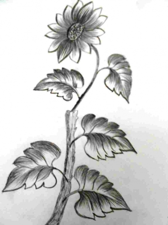 Popular Pencil Shading Flowers Free Pencil Sketch Flower Shading Photo