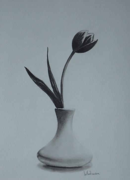Popular Pencil Sketch Of Flower Vase Simple Tulip In A Vase, Still Life Sketch. Original Art, Graphite Pencil Pic