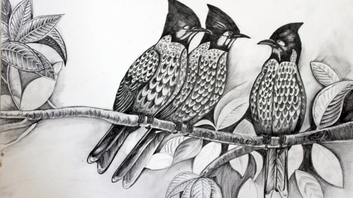 Popular Pencil Sketches Of Birds Courses Draw Birds Sketch With Pencil Full Video Hindi Explaination Picture