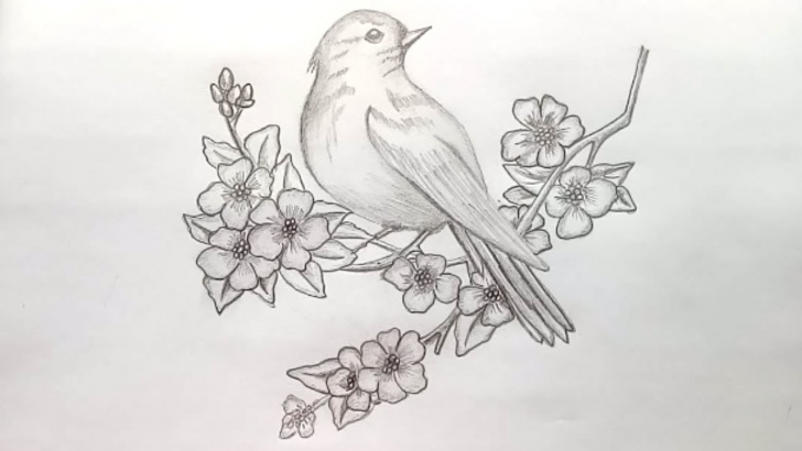 Popular Pencil Sketches Of Birds Easy How To Draw A Bird With Pencil Sketch.step By Step(Easy Draw) Picture