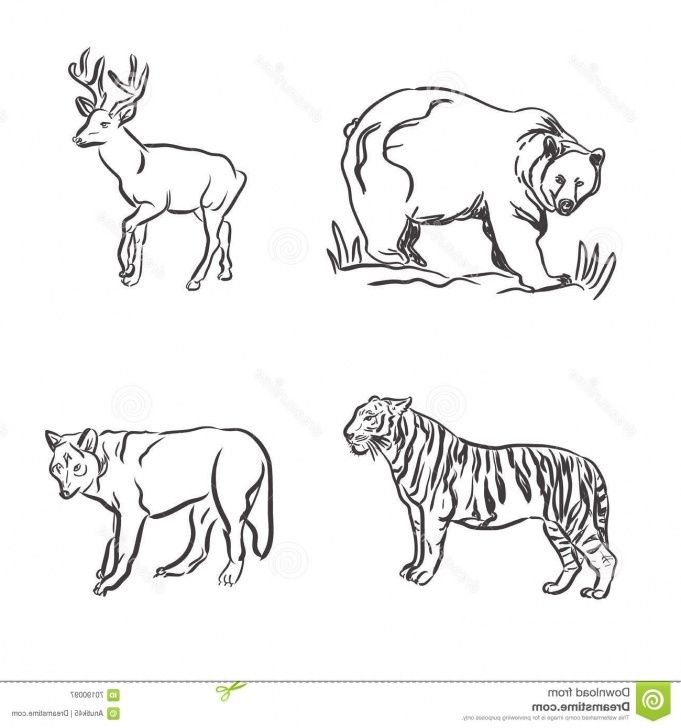 Popular Pencil Sketches Of Wild Animals for Beginners Wild Animals Sketch At Paintingvalley | Explore Collection Of Pic