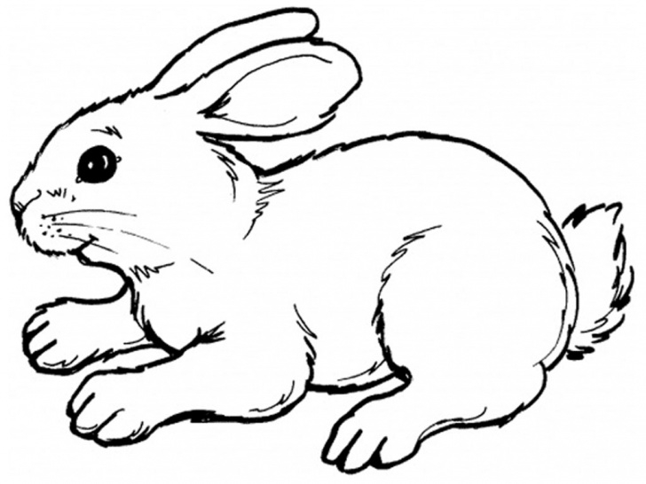 Popular Rabbit Pencil Art for Beginners Rabbit Sketch Drawing And Draw A Cartoon Rabbit Draw A Cartoon Picture
