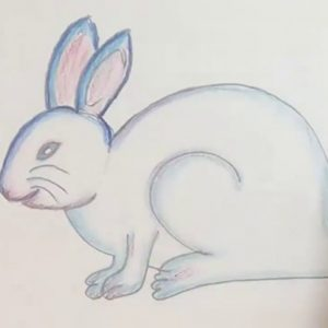 Popular Rabbit Pencil Drawing Step by Step How To Draw Rabbit Step By Step (Color Pencil) Images