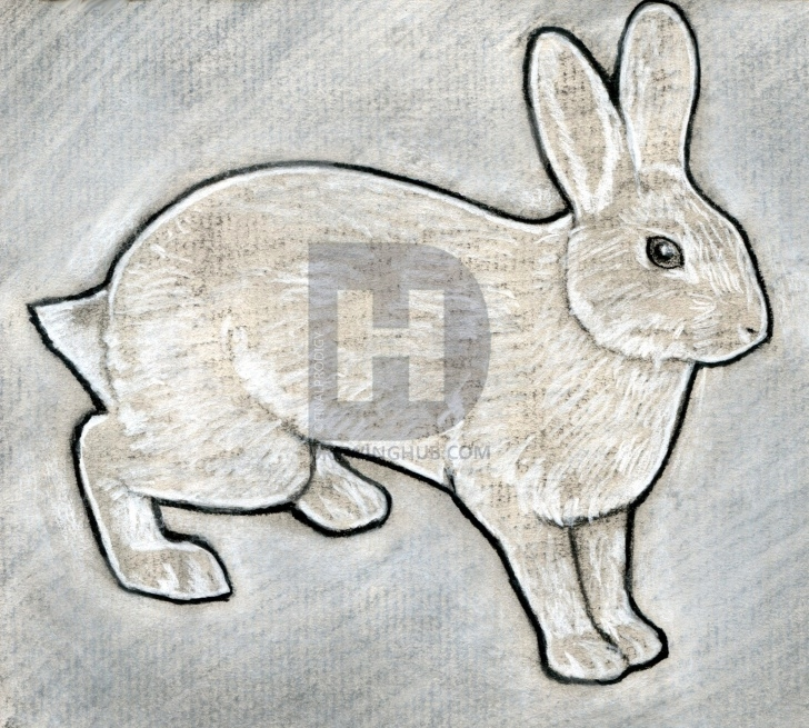 Popular Rabbit Sketch In Pencil Free How To Sketch A Rabbit, Step By Step, Drawing Guide, By Finalprodigy Photos