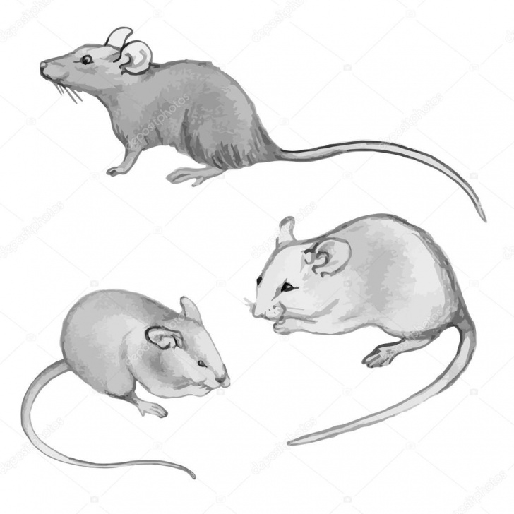 Popular Rat Pencil Drawing Courses Rats, Mice - Pencil Drawing By Hand (Set) — Stock Vector © Mila_Endo Pic