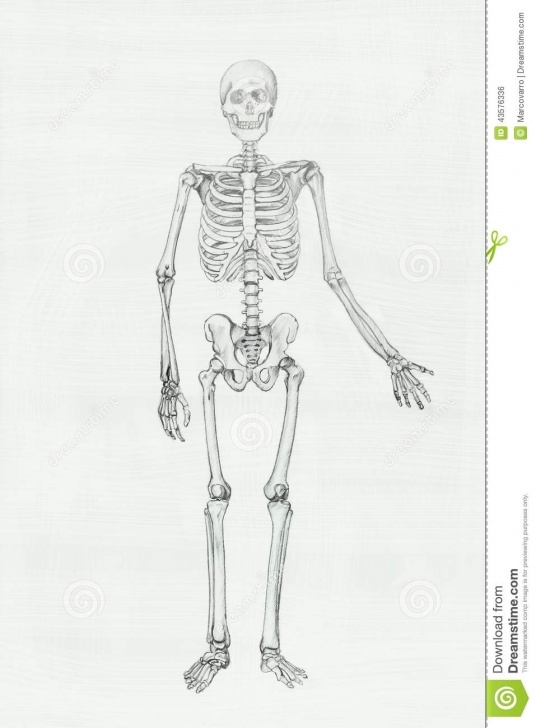 Popular Skeleton Pencil Drawing Techniques Skeleton Stock Illustration. Illustration Of Drawin, Human - 43576336 Picture