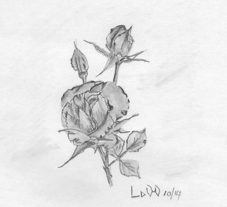 Popular Small Pencil Drawings Techniques for Beginners Small Pencil Drawing (5Cm High) Of A Rose | My Art Projects | Pencil Images