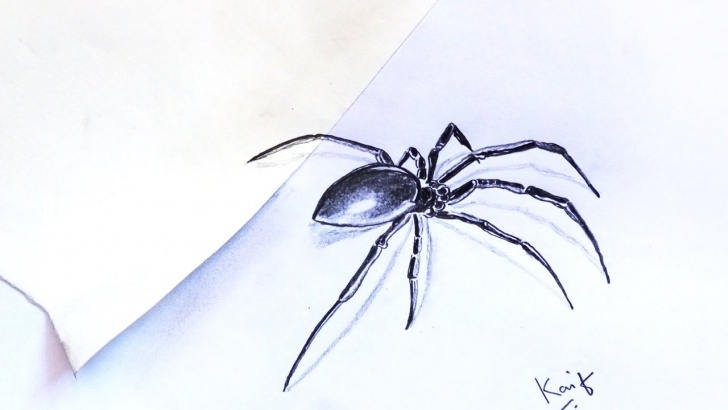 Popular Spider Pencil Drawing Free 3D Black Spider Pencil Drawing Images