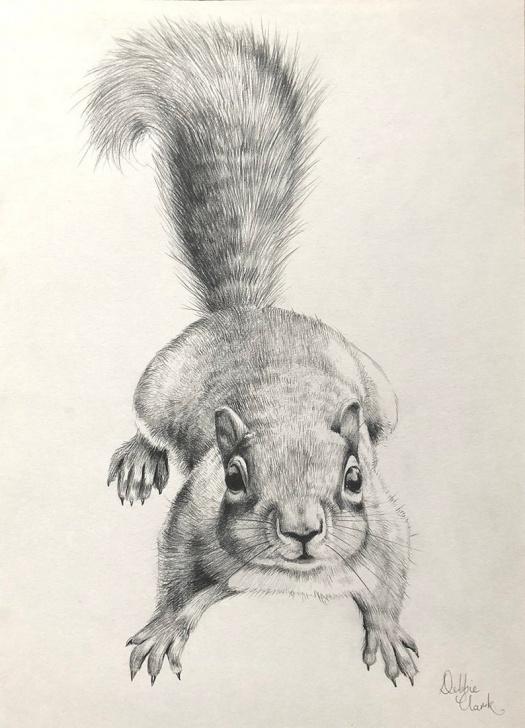 Popular Squirrel Pencil Drawing Simple Qriginal Art - Squirrel Pencil Drawing Pic